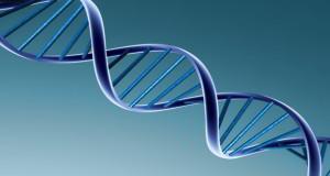 Un 4ème gène identifié dans la Polykystose Rénale Autosomique Dominante (PKRAD)